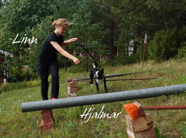 Att passera, hoppa, över de olika utlagda hindren var en baggis tyckte Härlige Hjalmar, med lite hjälp av lillmatte Linn.
