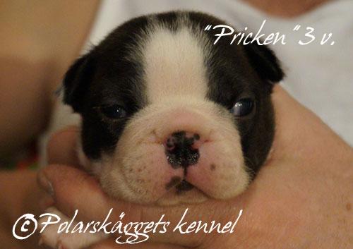 3v.Pricken1