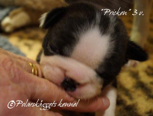 3v.Pricken14