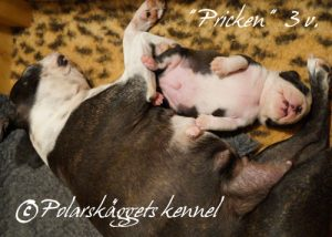 3v.Pricken2