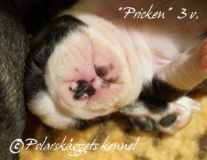 3v.Pricken4