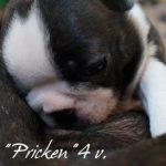 4v.Pricken10b.300px