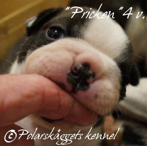 4v.Pricken7.finger.500px