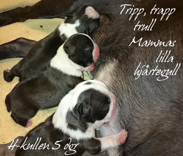 Tripp, trapp, trull, mammas lilla hjärtegull!
