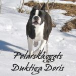 Doris4
