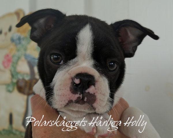 Holly-face600px