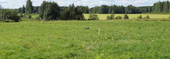 Ser ni Findus långt där borta i höggräset? Han fixade det.