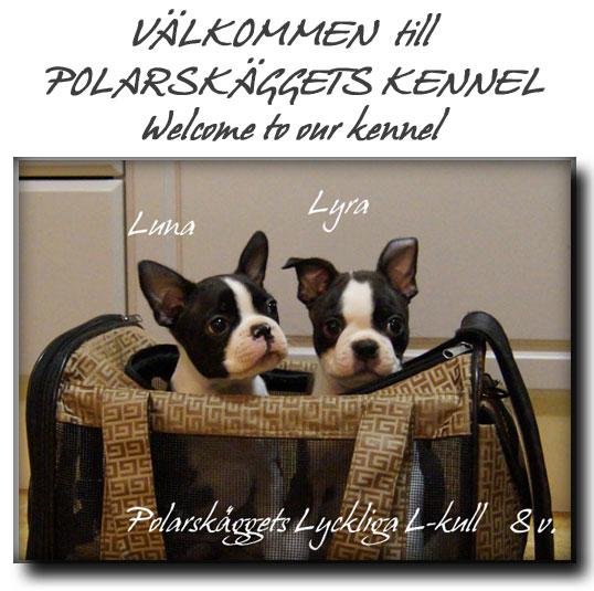 """Nu är Polarskäggets Lyckliga L-kull """"klara"""" för flytt till sina nya underbara hem. Vi önskar dem stort Lycka till!"""