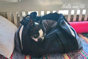 -Om jag kryper ner o gömmer mej i väskan som matte packat, då kan hon inte glömma mej hemma-