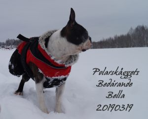 Bella pose
