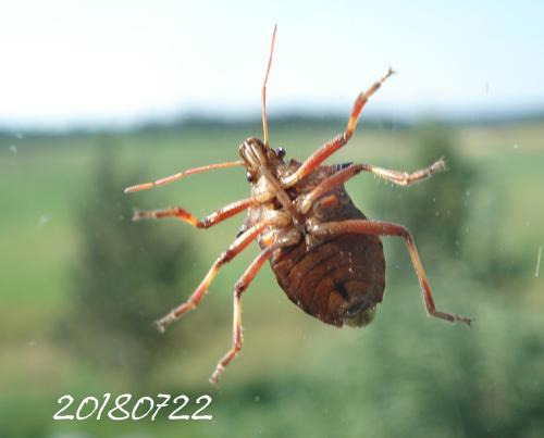 Spindel på altan-18