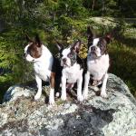 Tre generationer med Stumpan, Catla & Bella.
