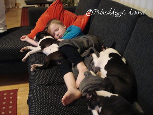 Tim-o-hundar-i-soffan-vår-1