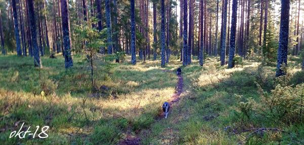 skog okt18