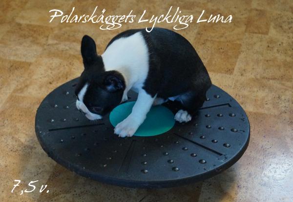 Lyra väljer att smita iväg och sätta sej på balansbrädan då hon lyckades sno en makaron som matte tappade ner